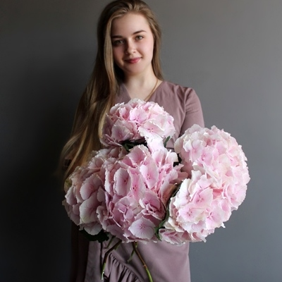 Send hydrangea to Moscow